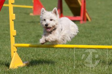Afgelopen zondag gaf fotograaf Patrick van Gemert een workshop hondenfotografie bij de KC Brummen. Tijdens een korte presentatie kregen de 11 deelneemsters de basisregels van de fotografie uitgelegd om na de presentatie op het trainingsveld te kunnen fotograferen.