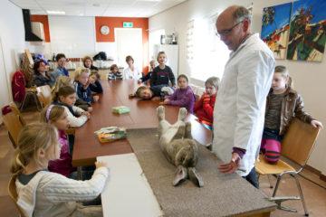 Leerlingen van groep 4 van basisschool Het Hoge uit Vorden krijgen bij de kleindierenshow uitleg van de keurmeester over de keuring bij de show.