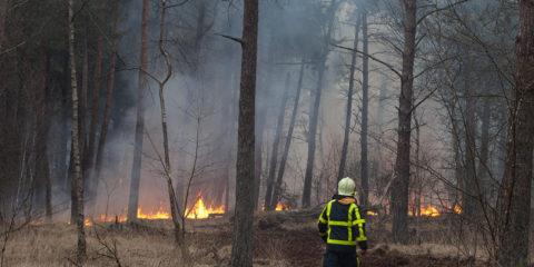 Bosbrand op het Grote Veld. Een brandweerman op een net aangelegde brandgang door het bos.