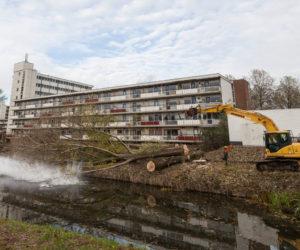 Bomenkap Zutphen. ©2016 Patrick van Gemert