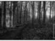 De bunker in het Warnsveldse bos, gefotografeerd met een Horizon 202 camera op Ilford HP5 film. ©Patrick van Gemert