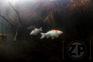 Onderwater met Fotograaf Patrick van Gemert. Hij toont zijn Zutphense onderwaterfoto's in Het Leeuwenhuisje. De expositie is woensdag t/m zaterdag geopend van 10:00 tot 17:00 en op zondag van 12:00 tot 17:00.