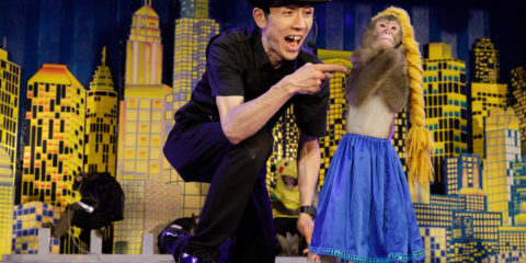 Three times a day, at the Nikkō Sarun Gundan theater, monkey trainer Yayushi performs with his monkey Hiroshi . Hiroshi misbehaves while being dressed up as Elsa from Disney's Frozen, so Yayushi reprimands corrects the well trained monkey. This commercial form of monkey entertainment derived from the traditional performance art Sarumawashi which has been around for more than 1200 years. While traditional Sarumawashi still exists today, the appeal of the modern performances lie in the anthropomorphic appearance of the monkeys, which are invariably dressed in costumes and walk on two legs. The circus-like performances are a mixture of gymnastic accomplishment and slapstick humor, and audiences both applaud the achievements of the monkeys and laugh at the obvious shortcomings in their human role-play.